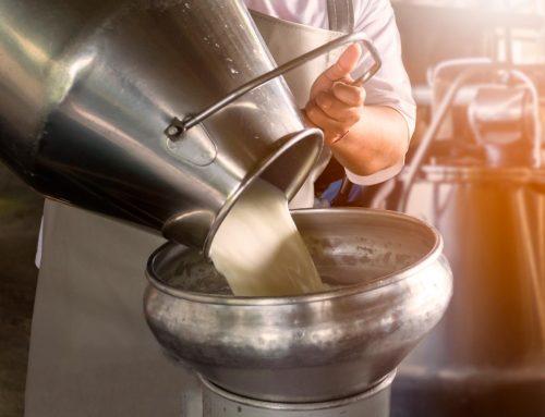 Pasteurização: qual a importância desse processo para o leite?